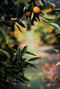Frutteto | Luna del Raccolto