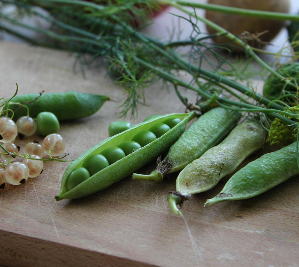 Vegetable garden   Luna del Raccolto